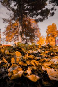 Leaf Removal Tulsa