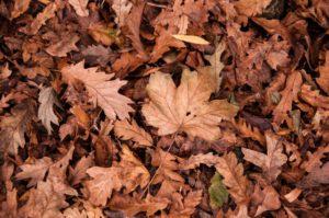 Leaf Removal in Tulsa, Oklahoma