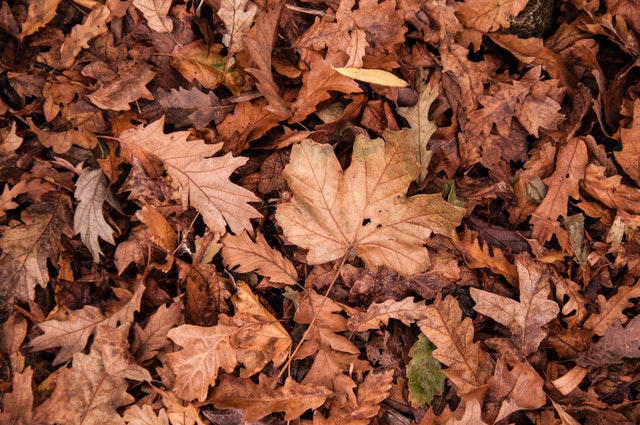 Leaf removal services help keep a clean yard